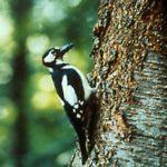 Waldameisen dienen vielen Tieren als wichtige Nahrungsquelle.